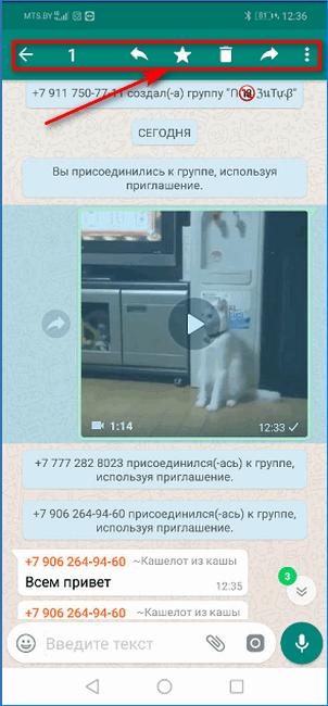 Выбор видео для передачи в публичной группе WhatsApp