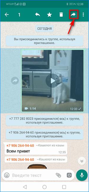 нопка для передачи видео из публичной группы WhatsApp